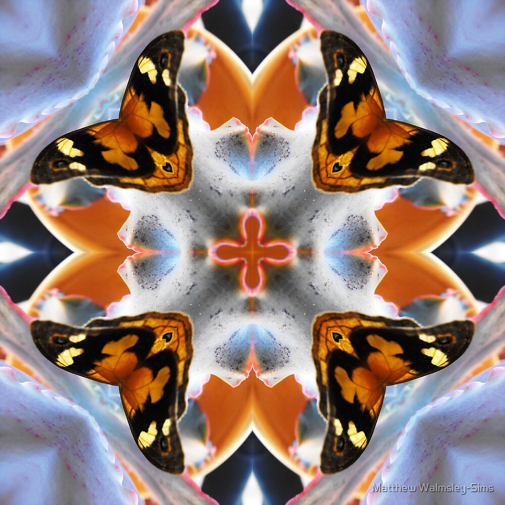 Butterfly Dreams by Matthew Walmsley-Sims