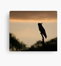 Cockatoo in the early morning - Upper Plenty Canvas Print