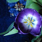 Vibrant Purple Tulip by SunriseRose