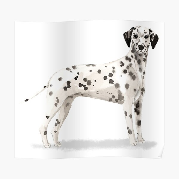 Dalmatian Pups Play Cute Dog Poster Sweet Puppy Funny Animal Best Friend Photo