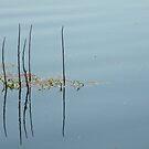 Myakka Reeds by Rosalie Scanlon