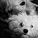 Wilmer and Niko by PPPhotoArt