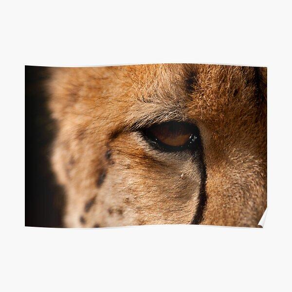 Cheetah Eye, Close Up Poster