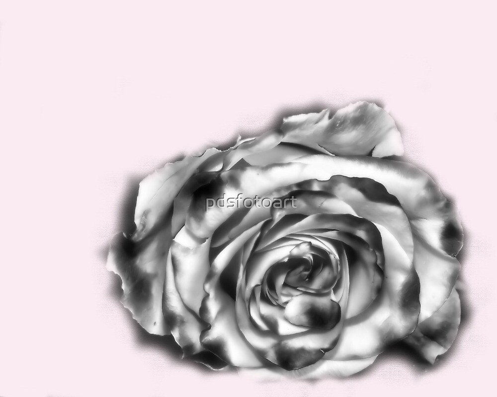I was dreaming of a rose by pdsfotoart