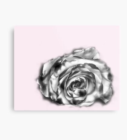 I was dreaming of a rose Metal Print