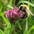 A little Bee by ienemien
