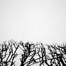 « Arboressence#3 » par Xavier Gavaud