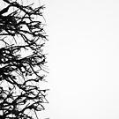« Arboressence#4 » par Xavier Gavaud