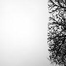 « Arboressence#5 » par Xavier Gavaud
