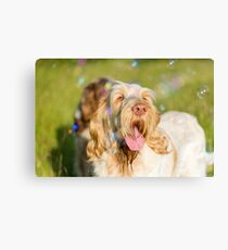 Orange and White Italian Spinone Dog Head Shot with Bubbles Canvas Print