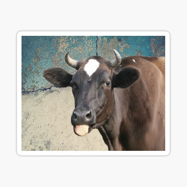 Cow Print Funny Cows Tongue Distressed Farm Gift for Cow Lovers Sticker