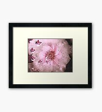 Life Of Chasing Butterflies Framed Print