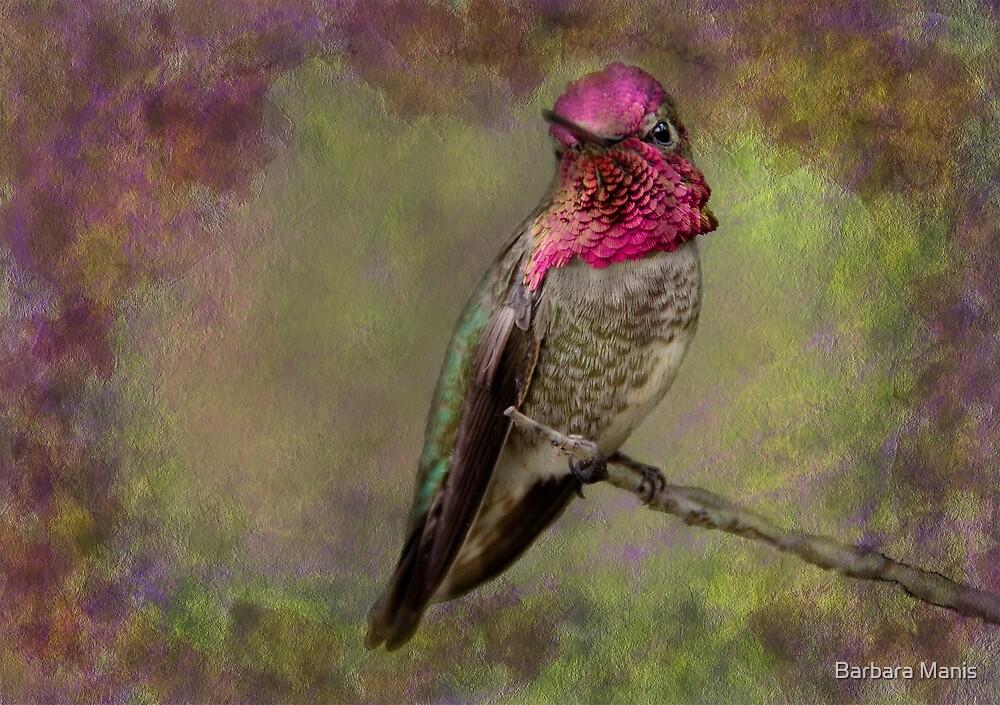 Anna's Hummingbird by Barbara Manis