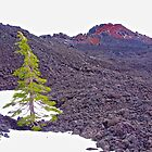 Lone Tree in a Volcanic Landscape by John Butler