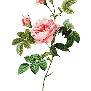 Romantic Rose Flower Sketch by aurielaki