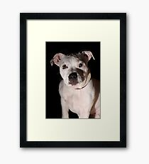 Portrait of Millie 2 Framed Print