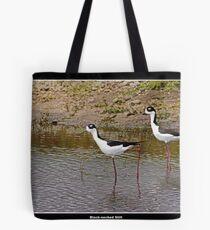 Black necked stilts in water Tote Bag