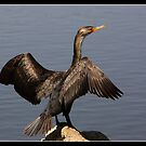 Cormorant drying feathers by Bigart32