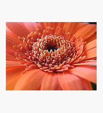 Orange Beauty (Super Macro) Photographic Print