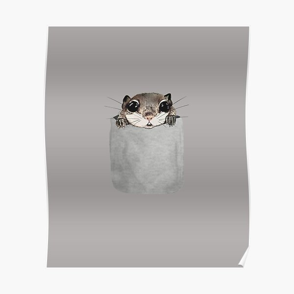 Flying Squirrel In My Pocket Drawing Poster