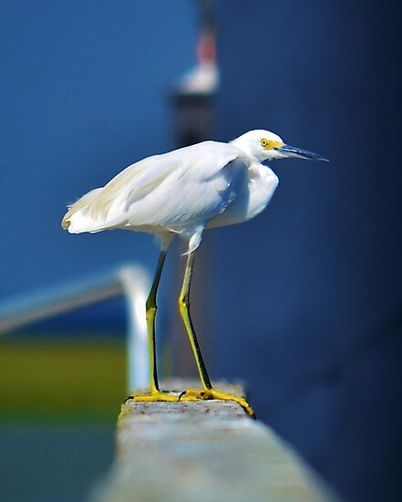 Egret by Bob Sample