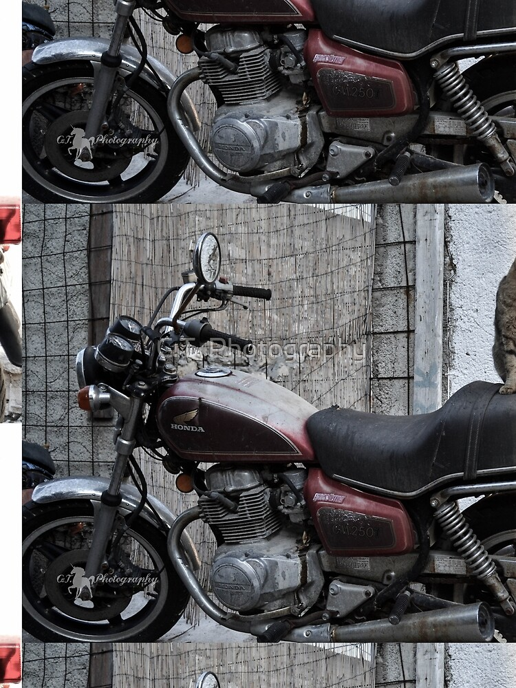 Cat on motorcycle von ChrisTina1990