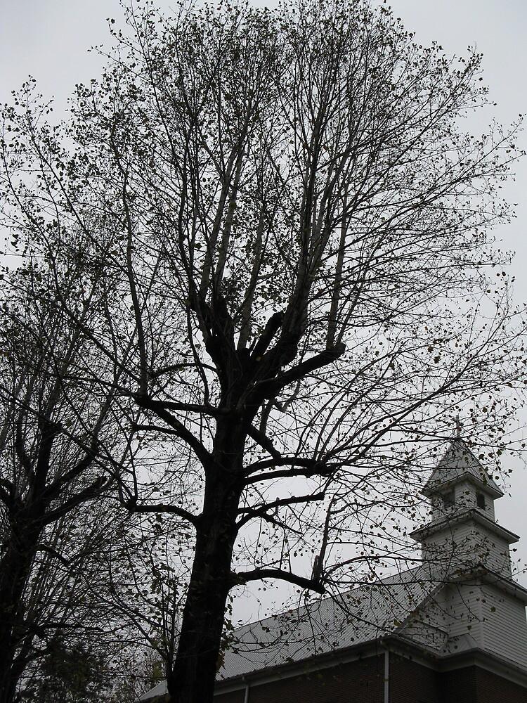 Church Tree by Hank Eder