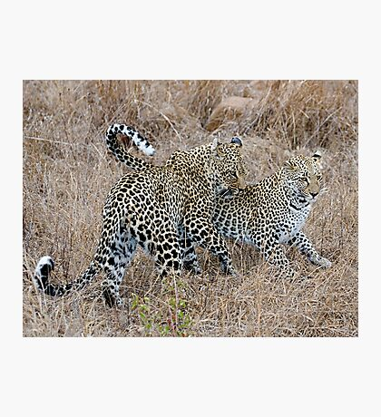 Mother and Daughter Leopards Photographic Print