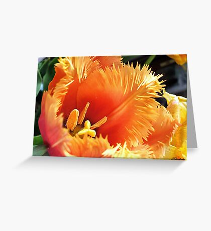 Tulip With A Fringe On Top Greeting Card