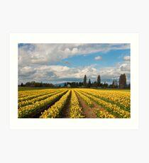 Skagit Valley Daffodils Art Print