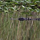 Everglades Reflection -  P7781_1 by Michael McCasland