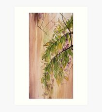 Wisteria Vines Art Print