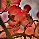 In the Pink by Barbara  Brown
