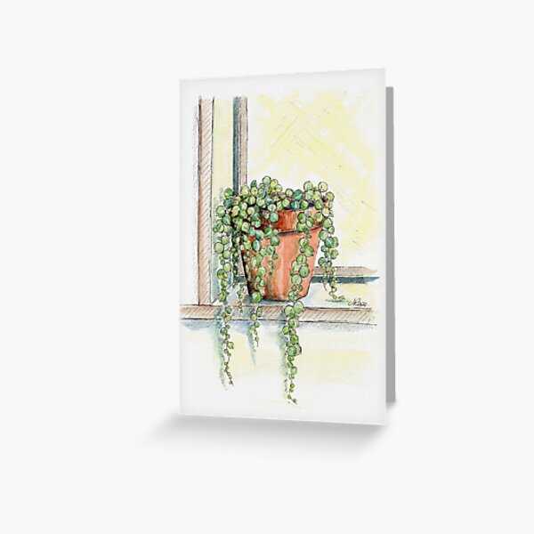String of Pearls Plant, Still Life Greeting Card