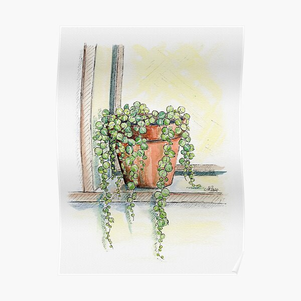 String of Pearls Plant, Still Life Poster