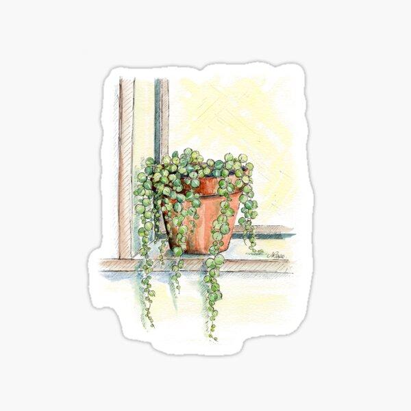 String of Pearls Plant, Still Life Sticker