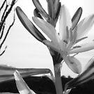 Desert Lily by Rosalee Lustig