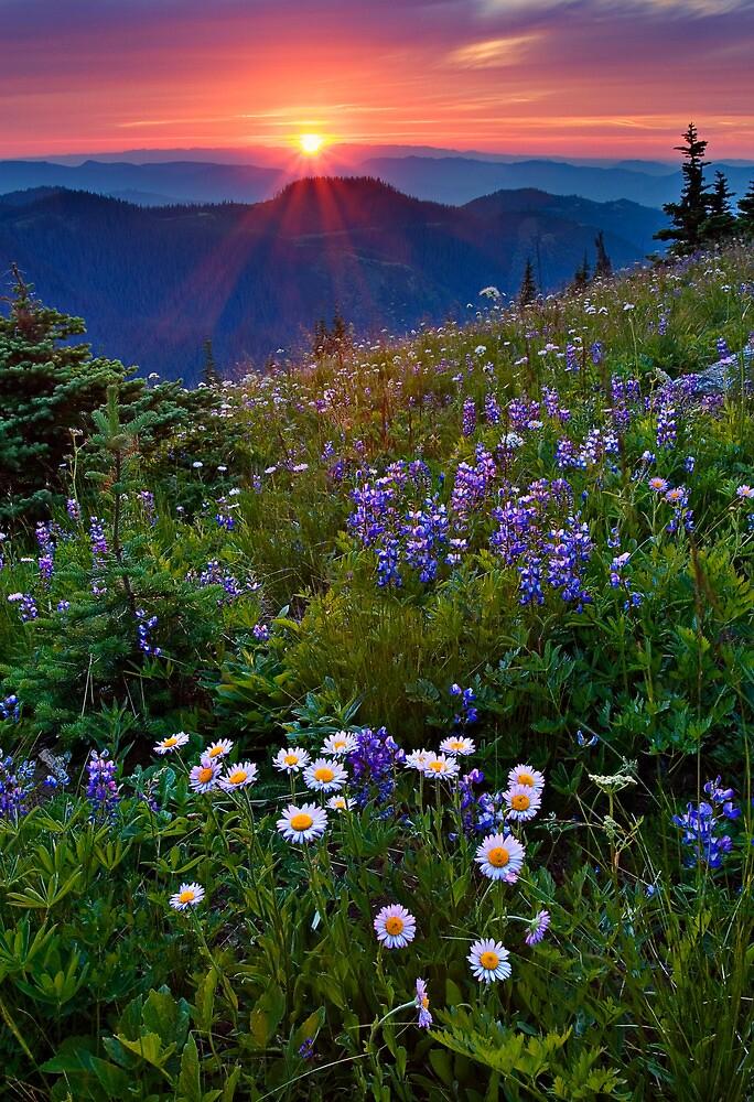 Wilderness beauty by Tomas Kaspar