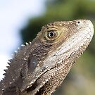 Eastern Water Dragon by Peter Pevy