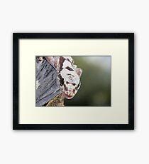 Smiley - Robust Velvet Gecko #2 Framed Print