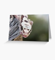Tongue Out - Robust Velvet Gecko #3 Greeting Card