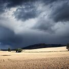 After the Storm by ShinyPhoto
