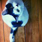 Spezielle kat von artbycaseylh