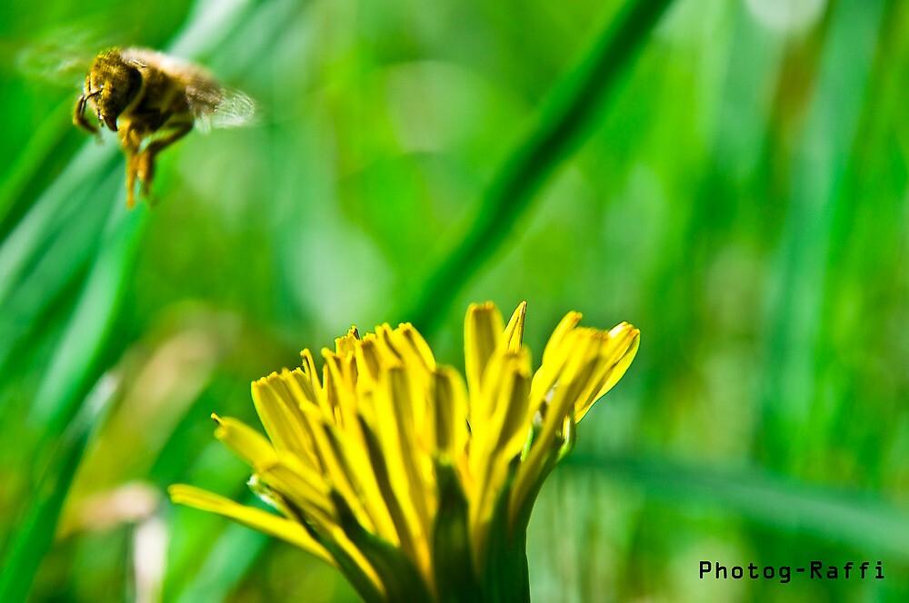 fly away by Raf N.