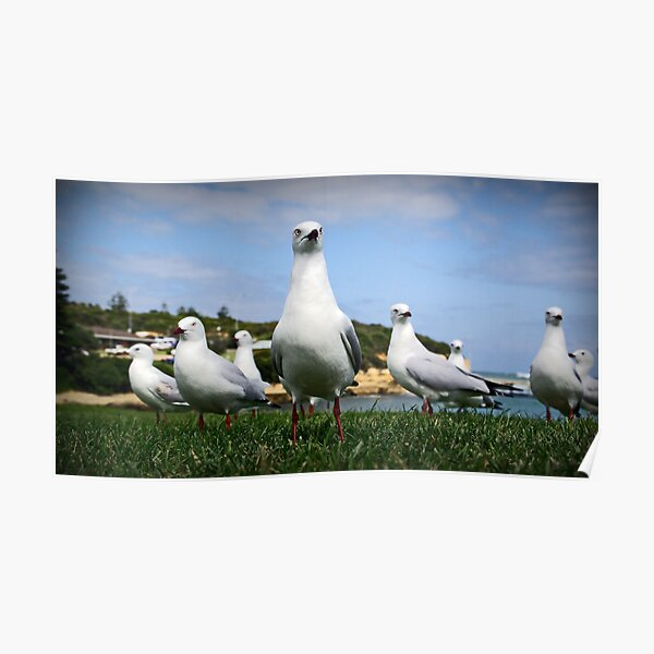 Gang of Gulls Poster