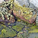 Rockpool by John Brotheridge
