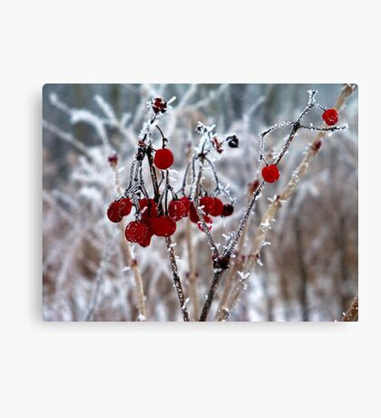 Iced Berries Canvas Print