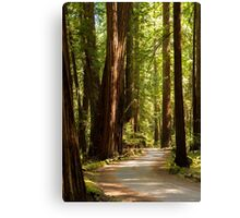 Road Through The Redwoods Canvas Print