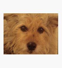 Tina The Terror Terrier! Photographic Print