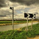 THIS WAY THAT WAY by j.p. Howley